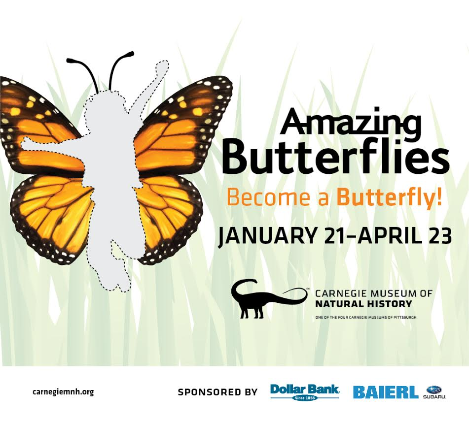 Amazing Butterflies at Carnegie Museum of Natural History | Jan 21 - April 23